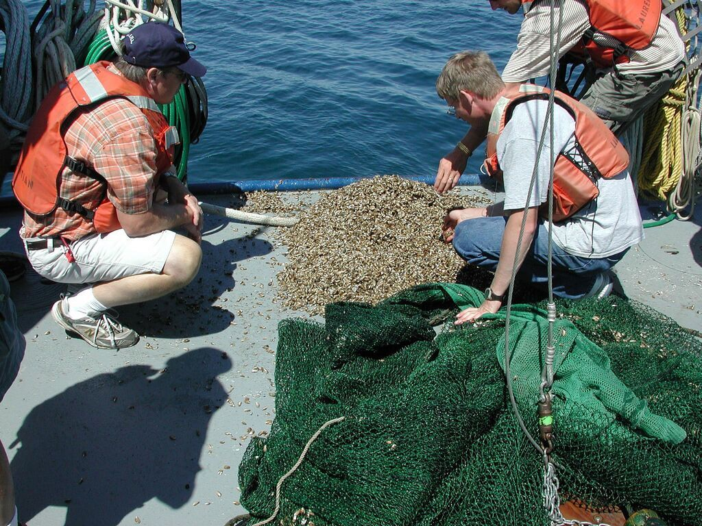 aquatic invasive species education DMM Risks pg_Quagga mussels in fish trawl in Lk Michigan 2006_NOAA